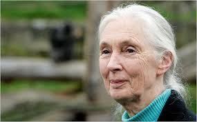 Jane Goodall Ambassador for Peace